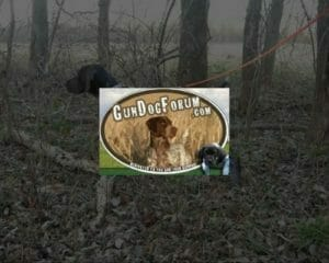 Gun Dog Forum
